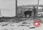 Image of Farm of Crow Native American Indian tribe Montana United States USA, 1921, second 58 stock footage video 65675041807