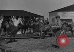 Image of Zebras and horses in circus Sarasota Florida USA, 1930, second 10 stock footage video 65675041973