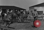 Image of Zebras and horses in circus Sarasota Florida USA, 1930, second 11 stock footage video 65675041973