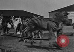 Image of Zebras and horses in circus Sarasota Florida USA, 1930, second 13 stock footage video 65675041973