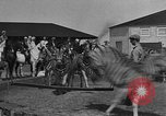Image of Zebras and horses in circus Sarasota Florida USA, 1930, second 14 stock footage video 65675041973
