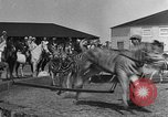 Image of Zebras and horses in circus Sarasota Florida USA, 1930, second 15 stock footage video 65675041973