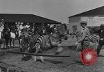 Image of Zebras and horses in circus Sarasota Florida USA, 1930, second 16 stock footage video 65675041973