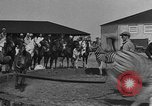 Image of Zebras and horses in circus Sarasota Florida USA, 1930, second 17 stock footage video 65675041973