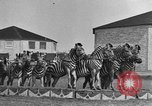 Image of Zebras and horses in circus Sarasota Florida USA, 1930, second 22 stock footage video 65675041973