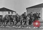 Image of Zebras and horses in circus Sarasota Florida USA, 1930, second 23 stock footage video 65675041973