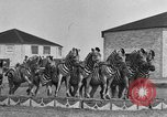 Image of Zebras and horses in circus Sarasota Florida USA, 1930, second 24 stock footage video 65675041973