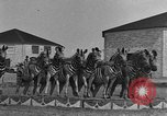 Image of Zebras and horses in circus Sarasota Florida USA, 1930, second 26 stock footage video 65675041973