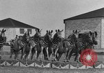 Image of Zebras and horses in circus Sarasota Florida USA, 1930, second 27 stock footage video 65675041973