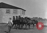 Image of Zebras and horses in circus Sarasota Florida USA, 1930, second 42 stock footage video 65675041973