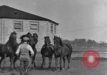 Image of Zebras and horses in circus Sarasota Florida USA, 1930, second 43 stock footage video 65675041973