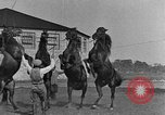 Image of Zebras and horses in circus Sarasota Florida USA, 1930, second 44 stock footage video 65675041973
