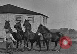 Image of Zebras and horses in circus Sarasota Florida USA, 1930, second 47 stock footage video 65675041973