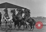 Image of Zebras and horses in circus Sarasota Florida USA, 1930, second 50 stock footage video 65675041973