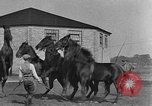 Image of Zebras and horses in circus Sarasota Florida USA, 1930, second 51 stock footage video 65675041973
