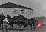 Image of Zebras and horses in circus Sarasota Florida USA, 1930, second 52 stock footage video 65675041973