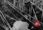 Image of United States ship Pannay China, 1937, second 43 stock footage video 65675042114