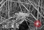 Image of injured men Nanking China, 1937, second 37 stock footage video 65675042123