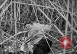 Image of injured men Nanking China, 1937, second 38 stock footage video 65675042123