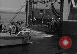 Image of mine sweep boats Sea of Japan, 1952, second 38 stock footage video 65675042591