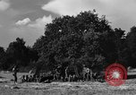 Image of United States Army African-American field artillery gun crew Mantes de Gassicourt France, 1944, second 45 stock footage video 65675042597