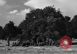 Image of United States Army African-American field artillery gun crew Mantes de Gassicourt France, 1944, second 48 stock footage video 65675042597