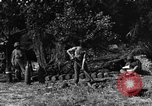 Image of United States Army African-American field artillery gun crew Mantes de Gassicourt France, 1944, second 55 stock footage video 65675042597