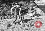 Image of United States Army African-American field artillery gun crew Mantes de Gassicourt France, 1944, second 57 stock footage video 65675042597