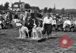 Image of Kennel Club dog show Westport Connecticut USA, 1930, second 13 stock footage video 65675042736