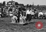 Image of Kennel Club dog show Westport Connecticut USA, 1930, second 14 stock footage video 65675042736