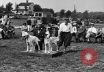 Image of Kennel Club dog show Westport Connecticut USA, 1930, second 15 stock footage video 65675042736