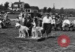 Image of Kennel Club dog show Westport Connecticut USA, 1930, second 16 stock footage video 65675042736