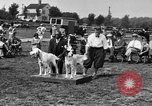 Image of Kennel Club dog show Westport Connecticut USA, 1930, second 17 stock footage video 65675042736