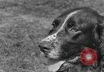 Image of Kennel Club dog show Westport Connecticut USA, 1930, second 18 stock footage video 65675042736