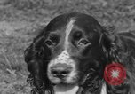 Image of Kennel Club dog show Westport Connecticut USA, 1930, second 20 stock footage video 65675042736