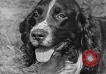 Image of Kennel Club dog show Westport Connecticut USA, 1930, second 22 stock footage video 65675042736