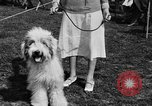 Image of Kennel Club dog show Westport Connecticut USA, 1930, second 23 stock footage video 65675042736