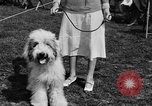 Image of Kennel Club dog show Westport Connecticut USA, 1930, second 24 stock footage video 65675042736