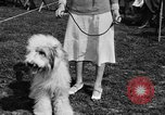 Image of Kennel Club dog show Westport Connecticut USA, 1930, second 25 stock footage video 65675042736