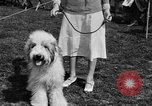 Image of Kennel Club dog show Westport Connecticut USA, 1930, second 26 stock footage video 65675042736