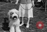 Image of Kennel Club dog show Westport Connecticut USA, 1930, second 27 stock footage video 65675042736