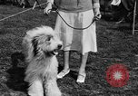 Image of Kennel Club dog show Westport Connecticut USA, 1930, second 28 stock footage video 65675042736