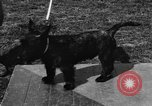 Image of Kennel Club dog show Westport Connecticut USA, 1930, second 40 stock footage video 65675042736