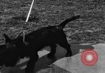 Image of Kennel Club dog show Westport Connecticut USA, 1930, second 41 stock footage video 65675042736