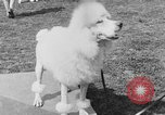 Image of Kennel Club dog show Westport Connecticut USA, 1930, second 48 stock footage video 65675042736