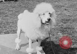 Image of Kennel Club dog show Westport Connecticut USA, 1930, second 53 stock footage video 65675042736