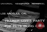 Image of leopards Los Angeles California USA, 1933, second 1 stock footage video 65675042746