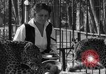 Image of leopards Los Angeles California USA, 1933, second 16 stock footage video 65675042746