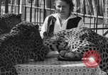 Image of leopards Los Angeles California USA, 1933, second 37 stock footage video 65675042746