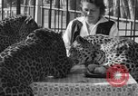 Image of leopards Los Angeles California USA, 1933, second 38 stock footage video 65675042746